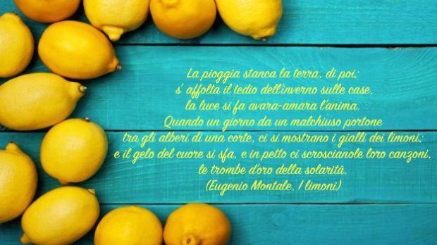 coltivare-i-limoni